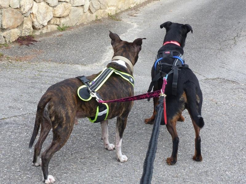 Team Ptit'LU et les sports canins : canirandonnée canicross canivtt canitrottinette 99355512