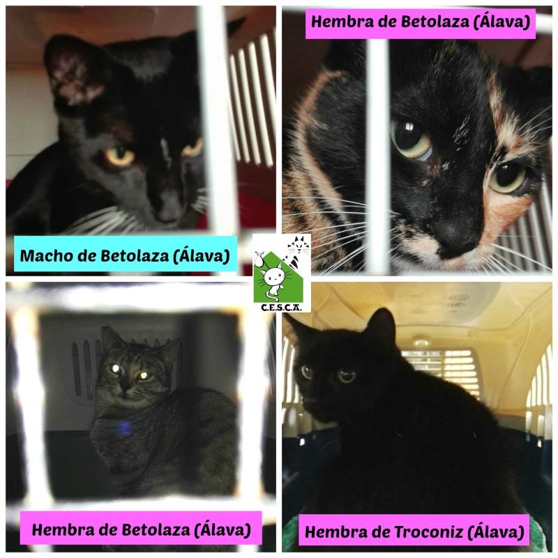 CESCA. La unión de Apa Sos Vitoria y Esperanza Felina por los gatos callejeros de Álava - Página 6 Picmon12