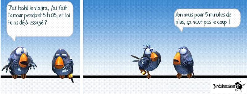 une petite blague :) - Page 17 Birds510
