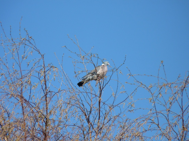 les visiteurs à plumes sauvages  2 P1020510