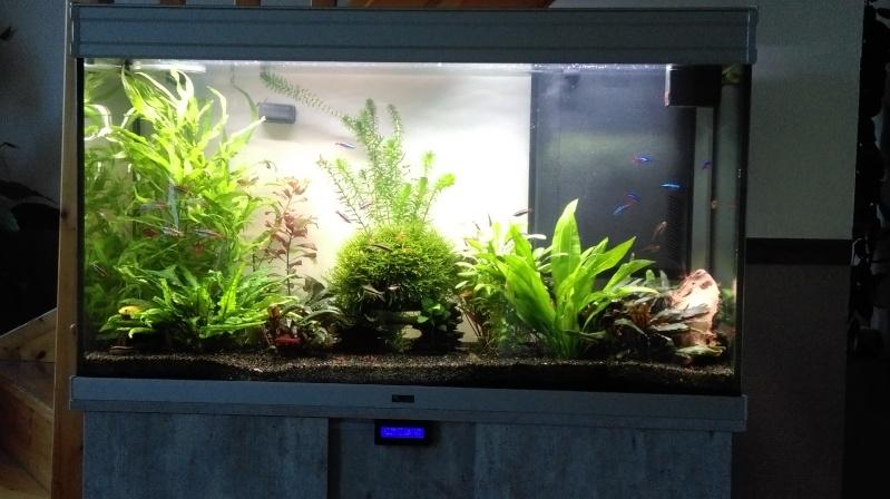 Mon nouveau aquarium Imag0111