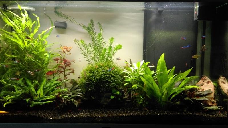 Mon nouveau aquarium Imag0113
