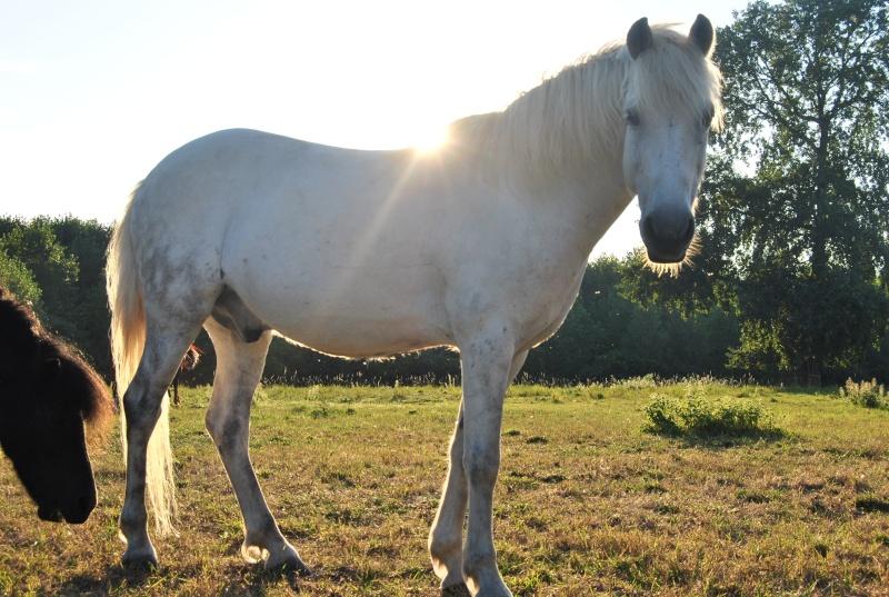 ISABEAU (dit IDEFIX) - ONC Poney né en 2001 - adopté en juillet 2016 par la ferme enfantine de Dammarie les Lys Dsc_7310