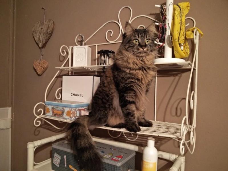 Des nouvelles de Lili chatte 12794610