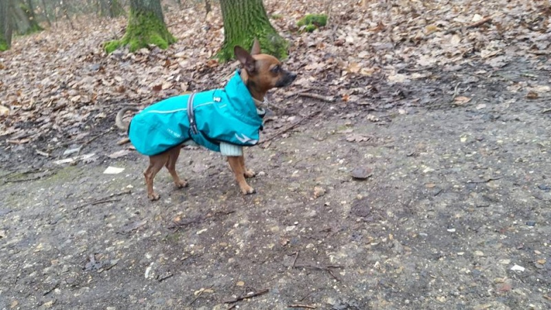 Froid: lui faire porter un manteau ou pas? - Page 12 12743910