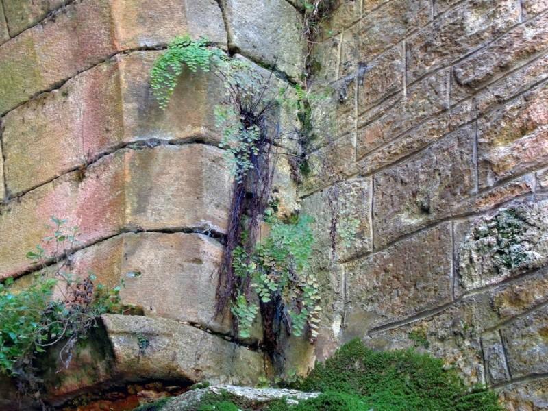 flore des vieux murs, rochers  et rocailles naturelles - Page 6 Dsc00714