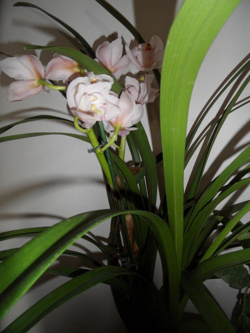 sous forum des orchidées- Comment entretenir son orchidée. 00111