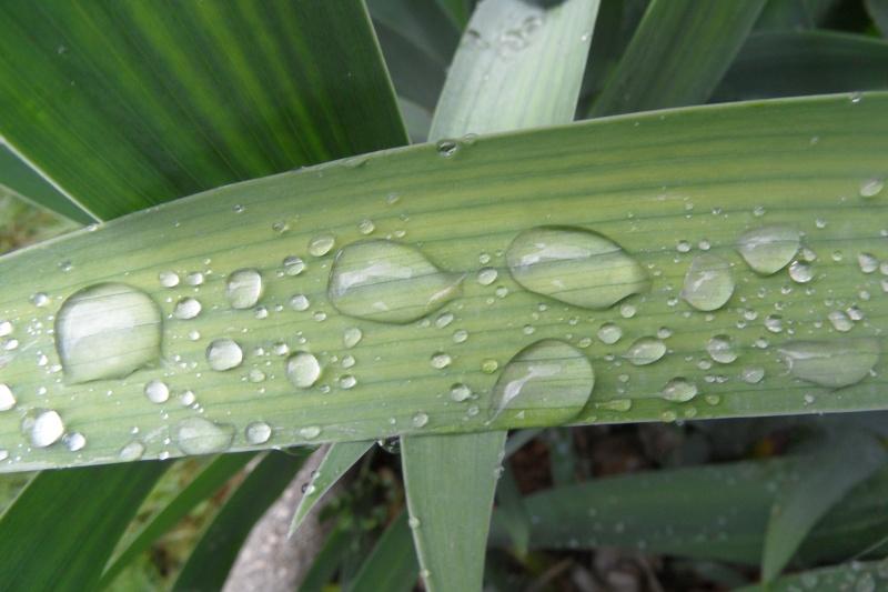 Gouttes de pluie.... Sam_3110