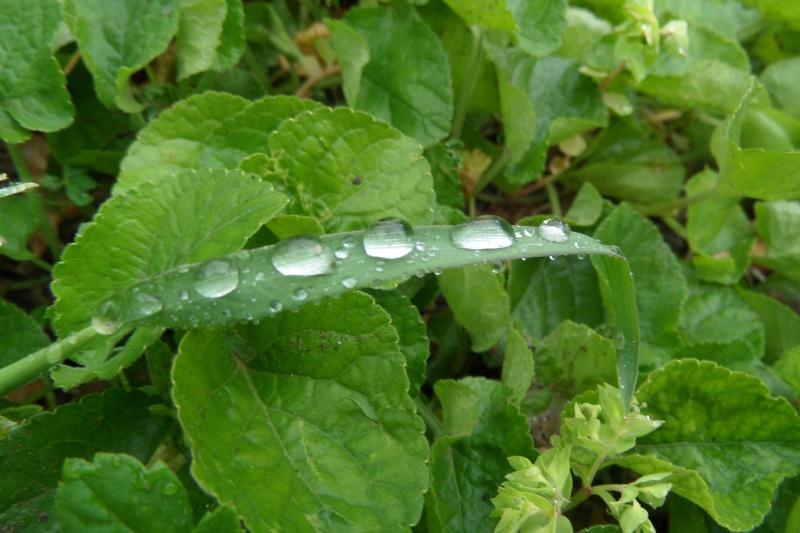 Gouttes de pluie.... Sam_3111