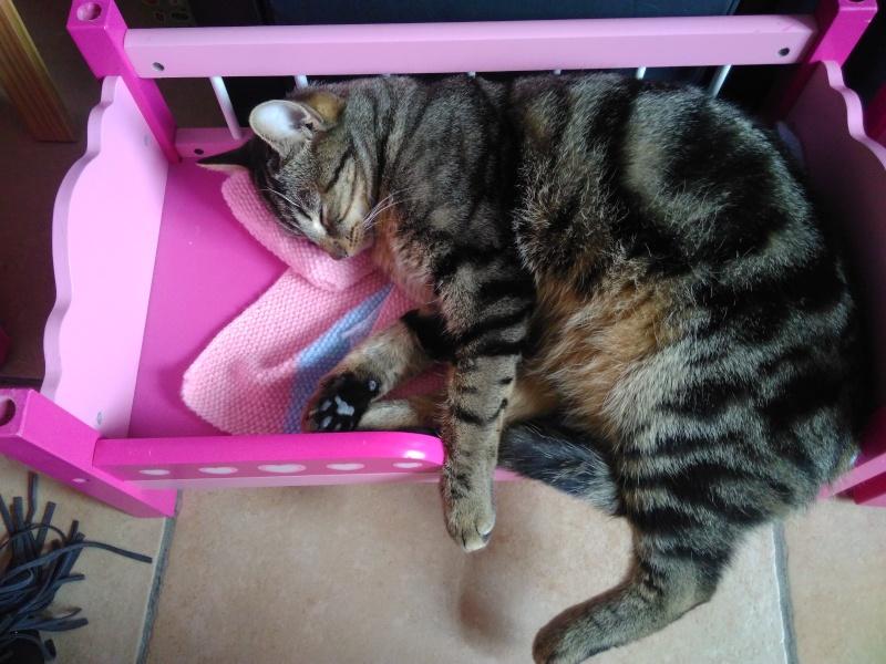 GRIBOUILLE, adorable chaton marbré de 10 semaines - Page 2 Img_2010