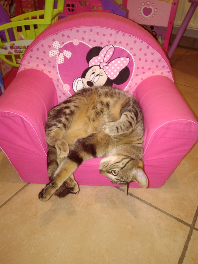 GRIBOUILLE, adorable chaton marbré de 10 semaines - Page 2 Img_2012