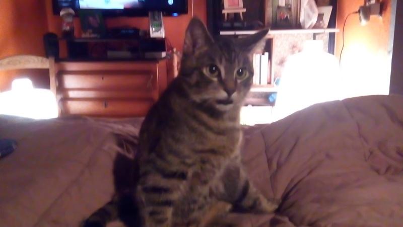 MARIE, adorable chatonne de 3 mois à la robe blanche - Page 2 Img_2015