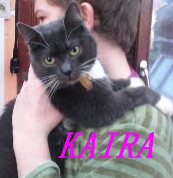 KAIRA, très belle chatte de 2 ans typée chartreuse et blanche Kairap10