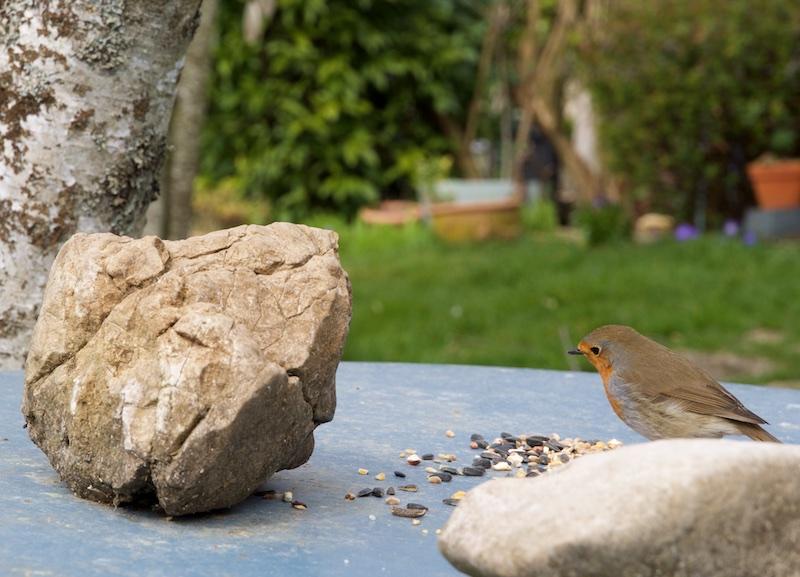 oiseaux au jardin. Wifi_310