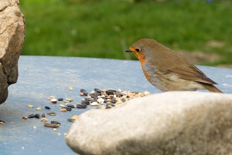 oiseaux au jardin. Wifi_410