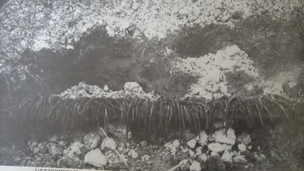 [ Histoires et histoire ] LE CENTENAIRE DE LA GRANDE GUERRE - Page 4 Dsc04414