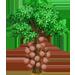 Vous cherchez un arbre ? Venez cliquer ici !!! Cannon13