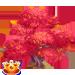 Vous cherchez un arbre ? Venez cliquer ici !!! Japane12