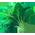 Cheval Leprechaun => Fer à Cheval Leprechaun Kale_p11