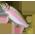 L'étang à poissons [Dans le jardin fermier et aquatique] Rainbo13