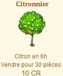 Citronnier Sans_t45