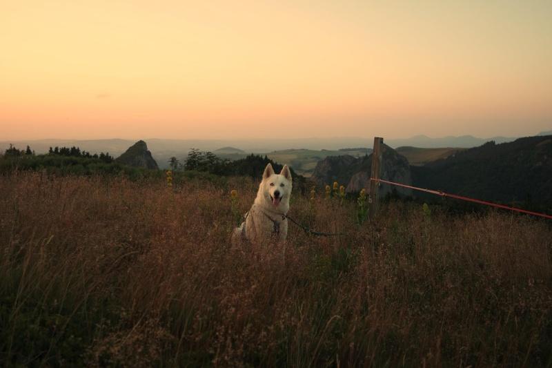 Trek - itinérance avec un chien 11698910
