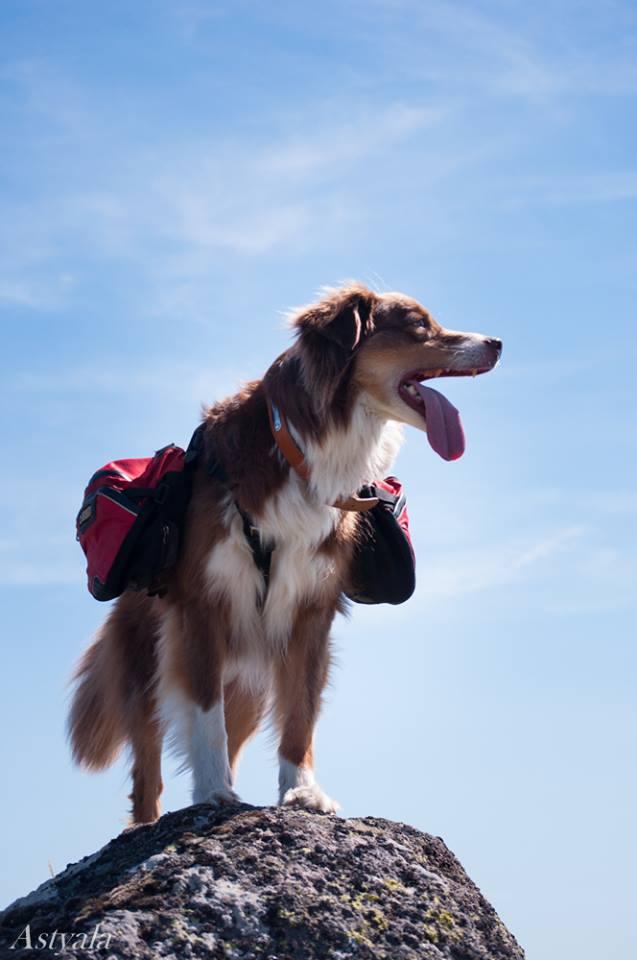 Trek - itinérance avec un chien 12107910