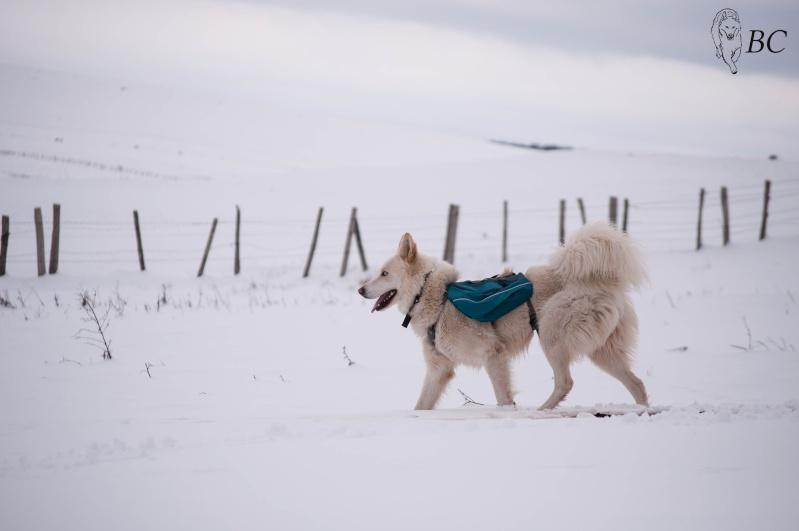 Trek - itinérance avec un chien Dsc_7919