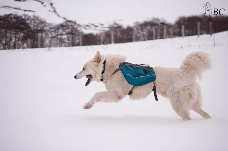 Trek - itinérance avec un chien Dsc_7920