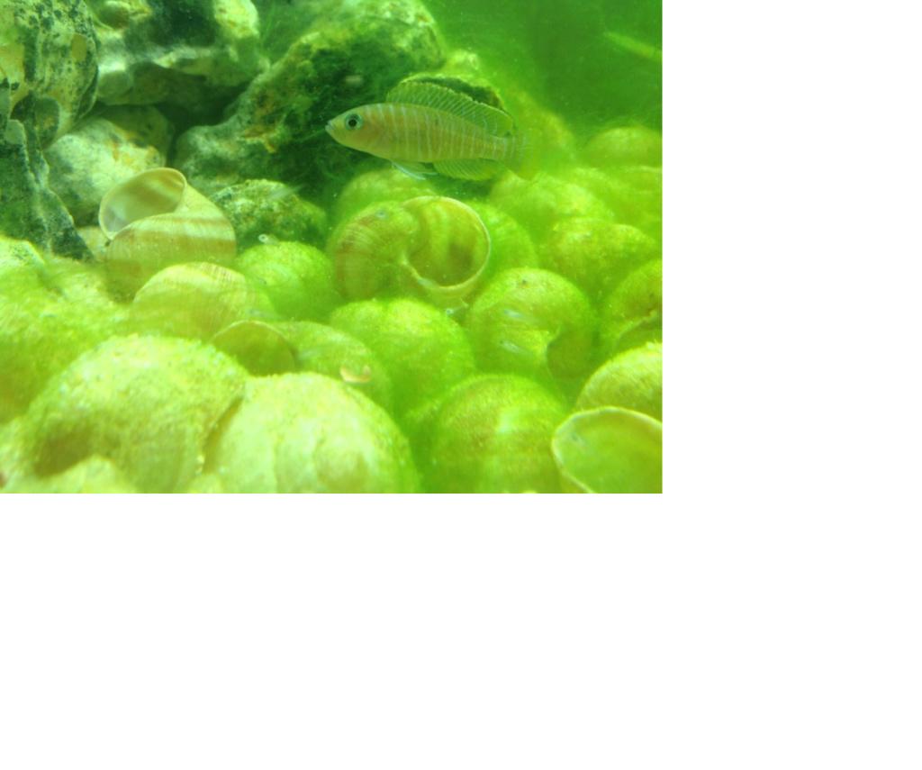 Algues verte Sans_t11