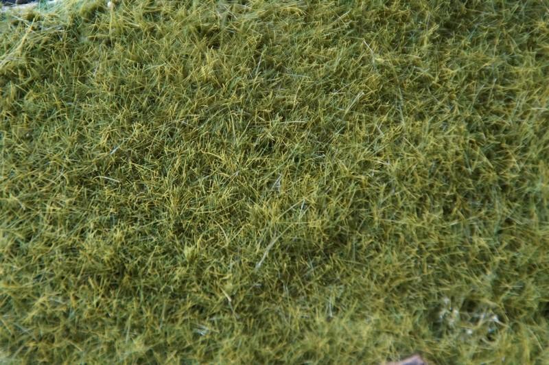 Tapis herbeux Dsc06337