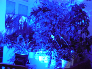 éclairage pour les plantes Lumiyr10