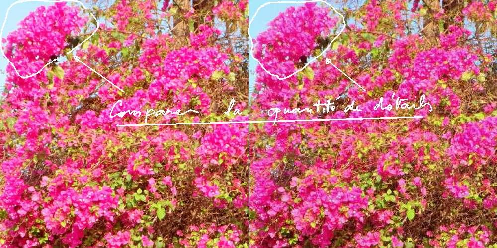 Jolis arbres, bord de route a grande circulation 1-211