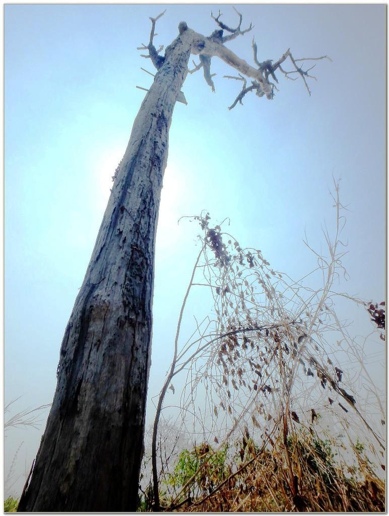 Un arbre mort 110