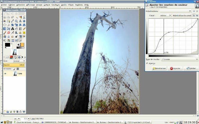 Un arbre mort 210