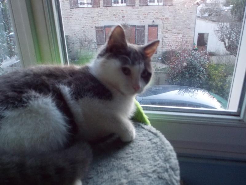 litchi - Litchi, chaton blanc et gris né le 11/09/2015 01511