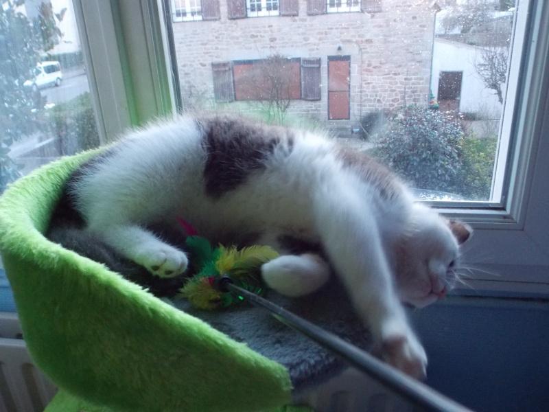 litchi - Litchi, chaton blanc et gris né le 11/09/2015 017_210