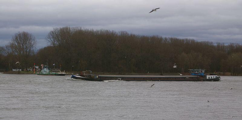 Was alles so auf dem Rhein schwimmt Imgp0922