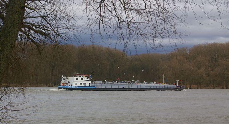 Was alles so auf dem Rhein schwimmt Imgp0927