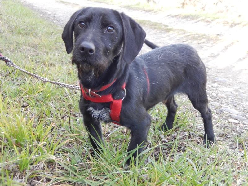 BOLIDE (chien croisé teckel/griffon) 1_dscn10
