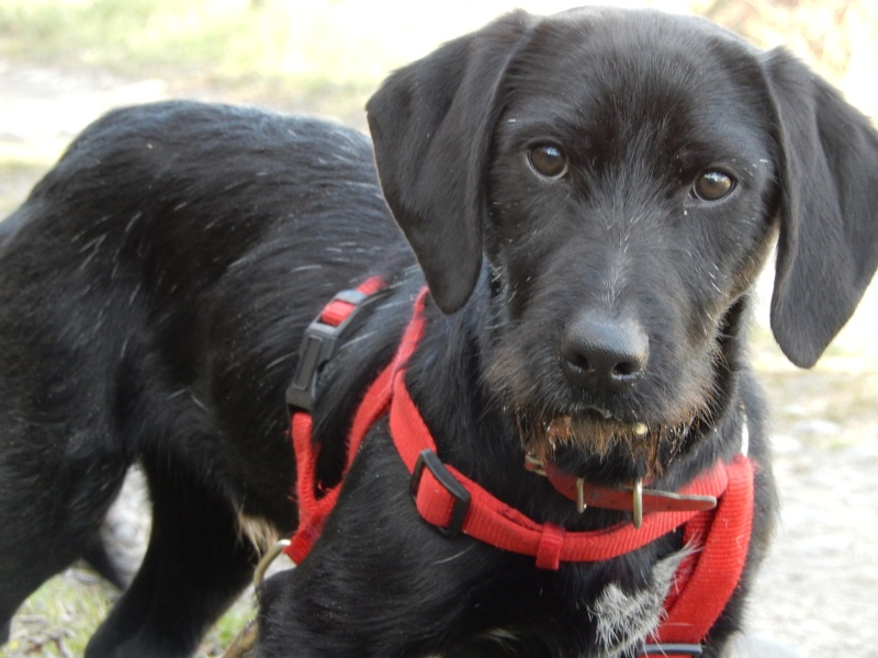 BOLIDE (chien croisé teckel/griffon) 6_dscn10