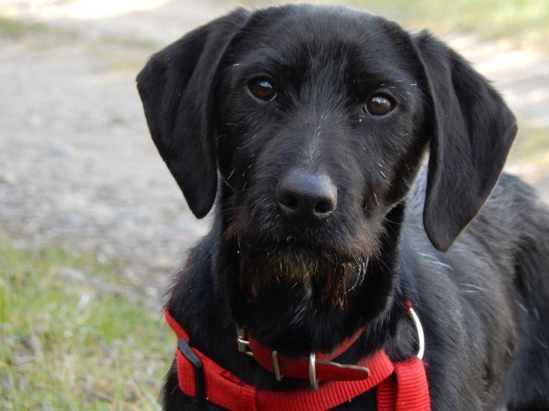 BOLIDE (chien croisé teckel/griffon) 7_dscn10