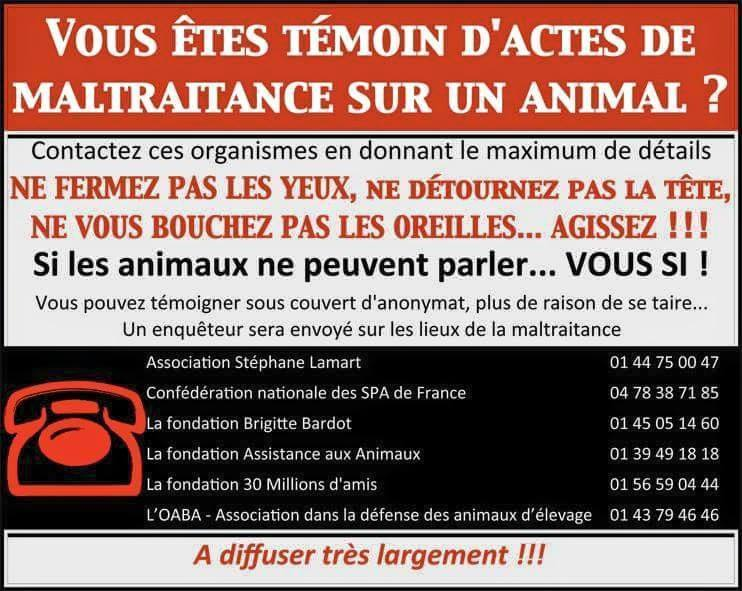 maltraitance animale, agir Reagis10