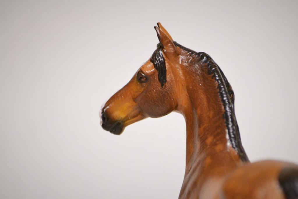Homemade models painted by Dark Pegasus Studio! :) Dsc_0617