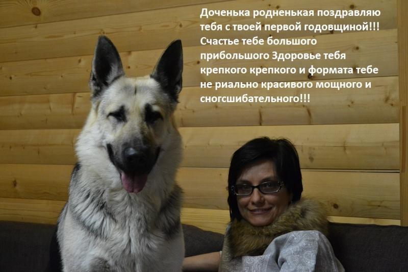 ВОСТОЧНО-ЕВРОПЕЙСКАЯ ОВЧАРКА ВЕОЛАР КАЙСАРА ЛЕТИ - Страница 9 Dsc_7020