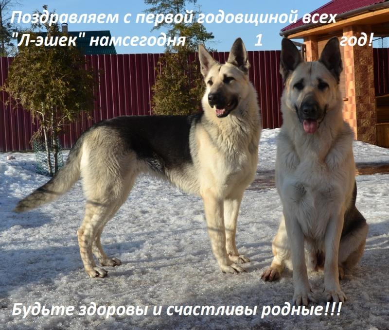 ВОСТОЧНО-ЕВРОПЕЙСКАЯ ОВЧАРКА ВЕОЛАР ЛЕГЕНДА - Страница 3 Dsc_7321