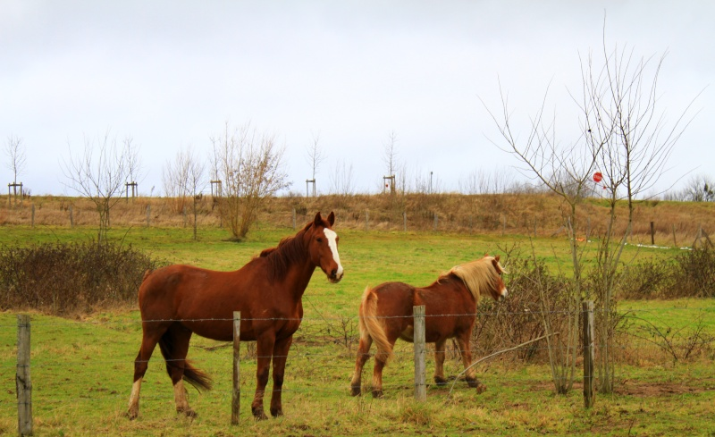 [Fil - Ouvert ] Chevaux Img_6110