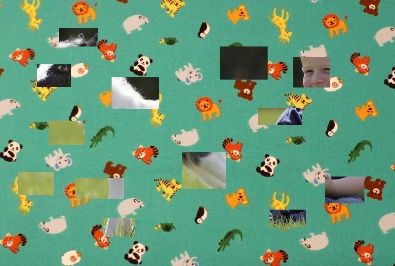 Animal de Martine - 22 mars trouvé par Ajonc Animal13