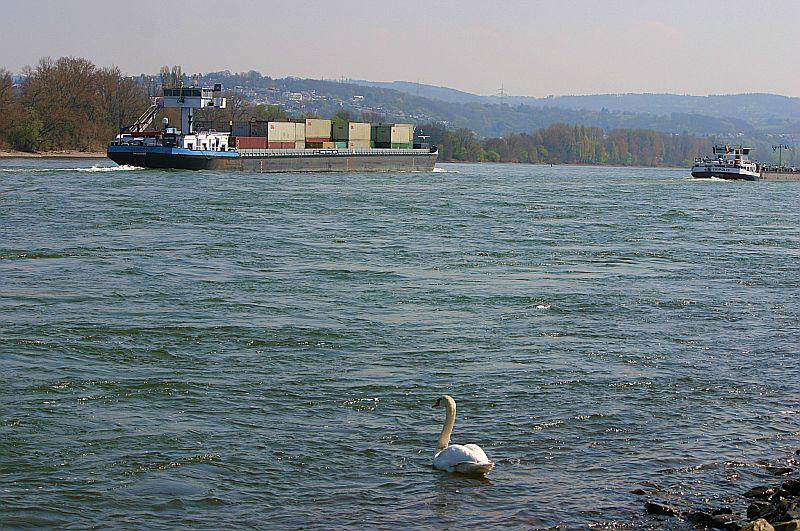 Kleiner Rheinbummel am Mittelrhein - Koblenz bis Bonn - Sammelbeitrag - Seite 2 Img_9145
