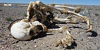 googline s'inquiète de la faim et la soif en Afrque Mimoun15